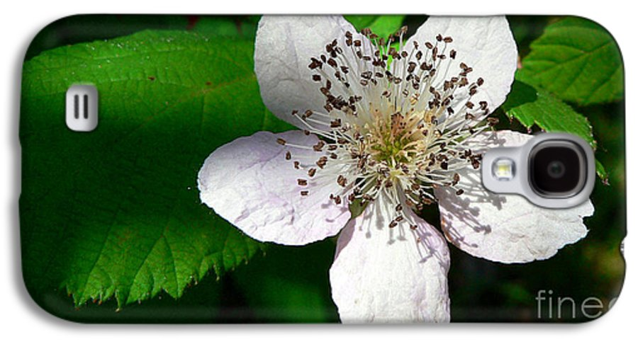Flower Galaxy S4 Case featuring the photograph Flower In Shadow by Larry Keahey