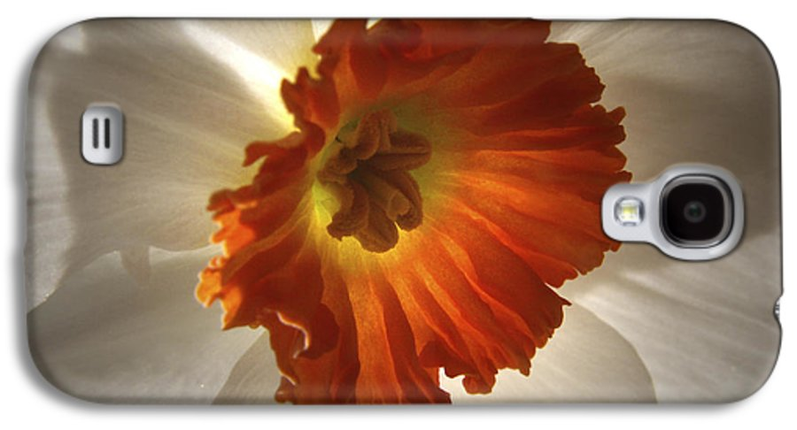 Flowers Galaxy S4 Case featuring the photograph Flower Narcissus by Nancy Griswold