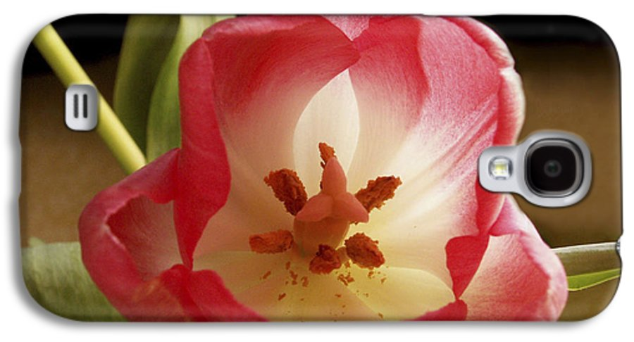 Flowers Galaxy S4 Case featuring the photograph Flower Tulip by Nancy Griswold