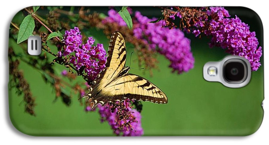Butterfly Galaxy S4 Case featuring the photograph Freedom by Debbi Granruth