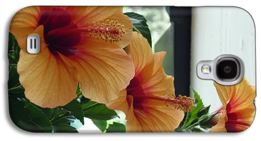 Photography Flower Floral Bloom Hibiscus Peach Galaxy S4 Case featuring the photograph Friends For A Day by Karin Dawn Kelshall- Best