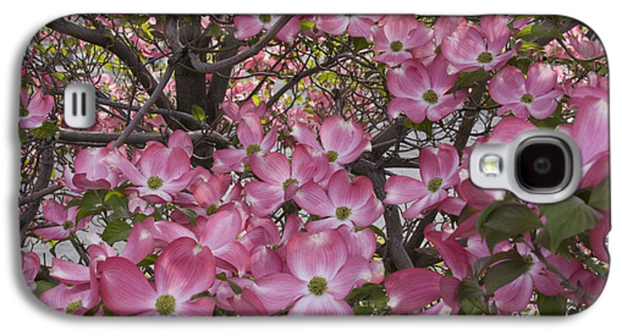Dogwood Galaxy S4 Case featuring the photograph Full Bloom by Idaho Scenic Images Linda Lantzy