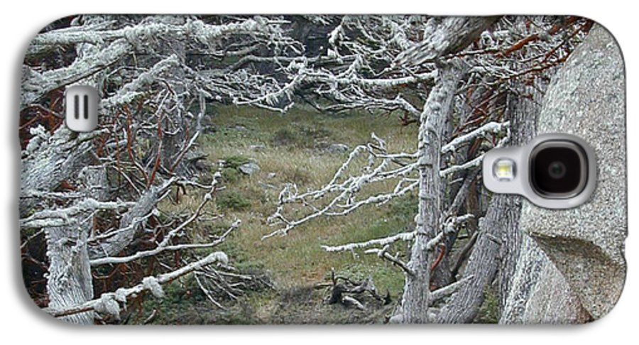 Lichens Galaxy S4 Case featuring the photograph Ghost Trees by Douglas Barnett