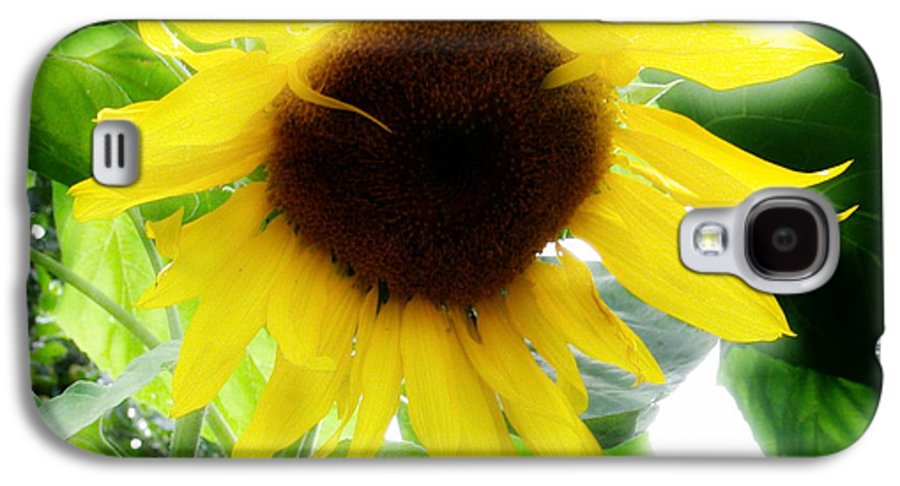 Sunflower Galaxy S4 Case featuring the photograph Golden Beauty by Idaho Scenic Images Linda Lantzy