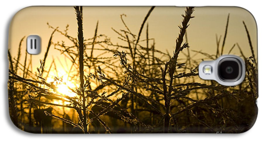 Golden Galaxy S4 Case featuring the photograph Golden Corn by Idaho Scenic Images Linda Lantzy