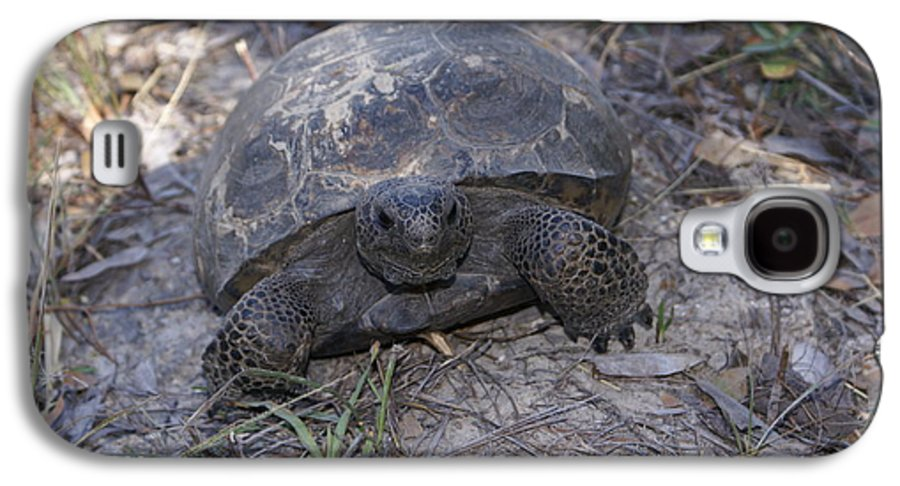 Turtle Galaxy S4 Case featuring the painting Golpher Mom 2 by Debbie May