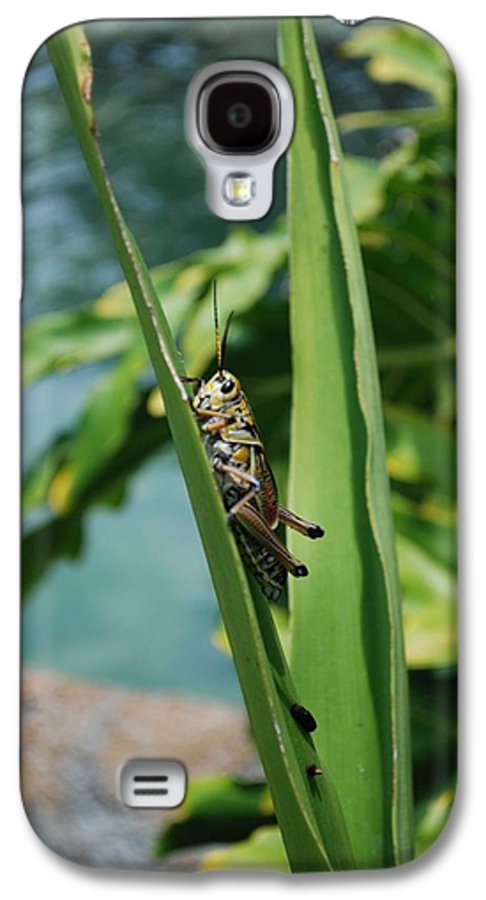 Field Galaxy S4 Case featuring the photograph Grasshopper by Margaret Fortunato