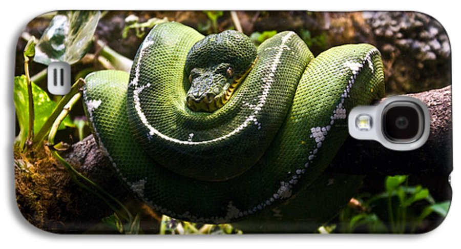 Green Galaxy S4 Case featuring the photograph Green Boa by Douglas Barnett