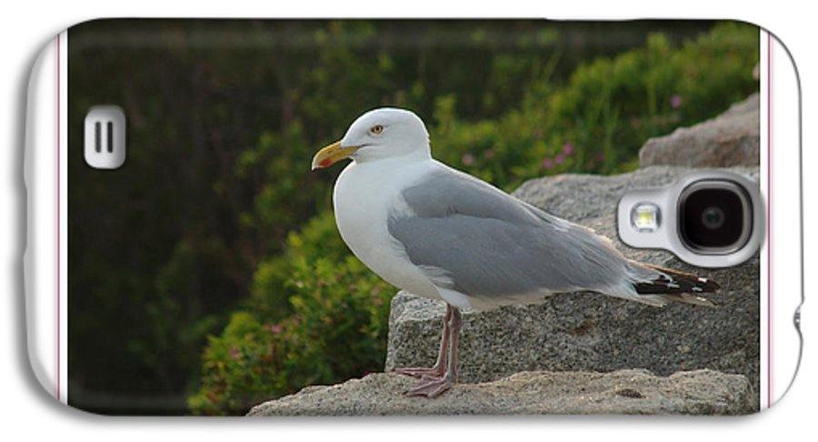 Landscape Galaxy S4 Case featuring the photograph Gull Able by Peter Muzyka