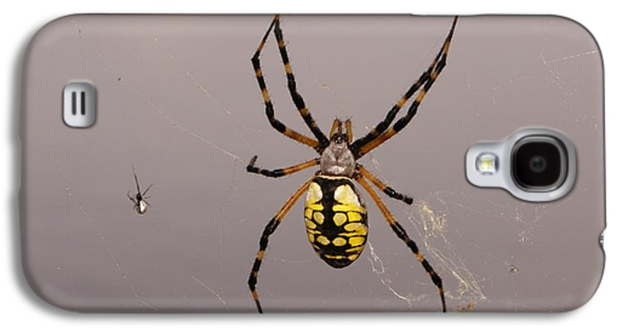 Spiders Galaxy S4 Case featuring the photograph Hanging In There by Debbie May