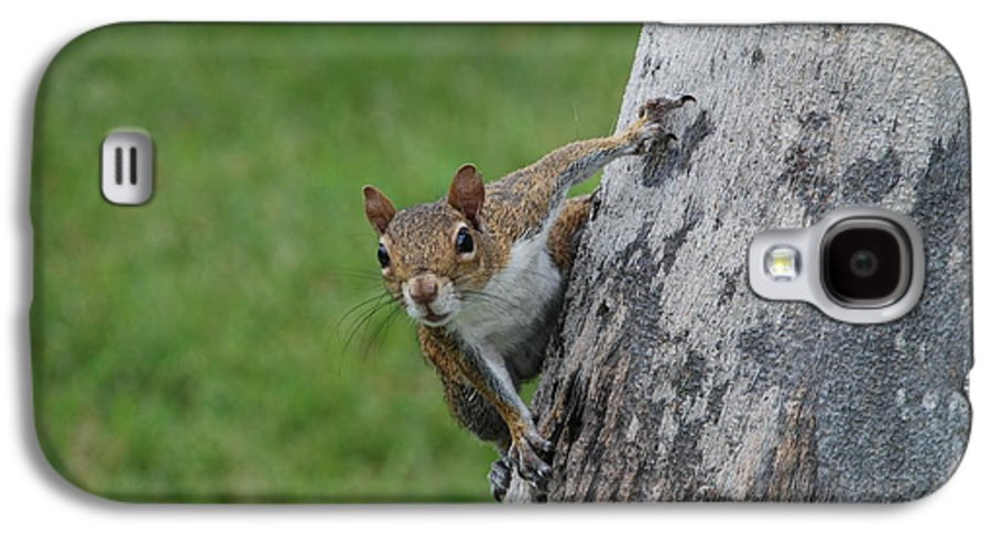 Squirrel Galaxy S4 Case featuring the photograph Hanging On by Rob Hans
