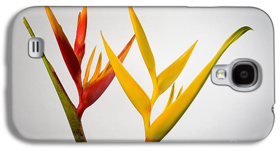 Botanical Galaxy S4 Case featuring the photograph Heliconia by Tomas del Amo - Printscapes