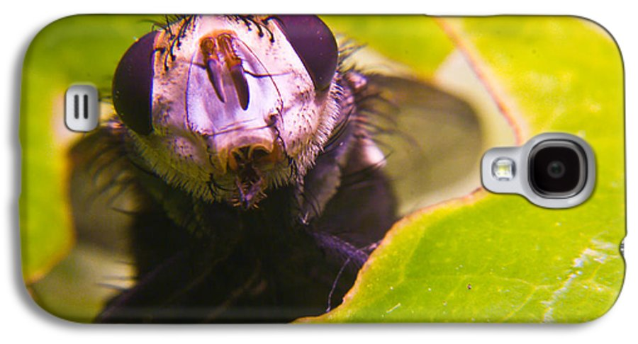 Fly Galaxy S4 Case featuring the photograph Hi There by Douglas Barnett