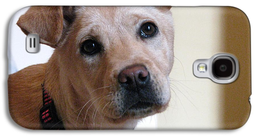 Dog Galaxy S4 Case featuring the photograph Honey by Amanda Barcon