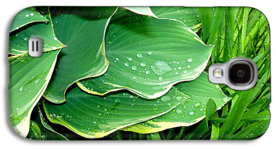 Hostas Galaxy S4 Case featuring the photograph Hosta Leaves And Waterdrops by Nancy Mueller