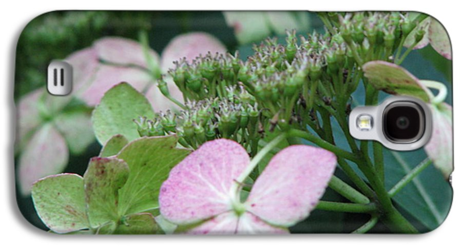 Hydrangea Galaxy S4 Case featuring the photograph Hydrangea by Amanda Barcon
