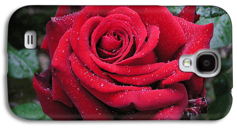 Rose Galaxy S4 Case featuring the photograph Icy Rose by Louise Magno