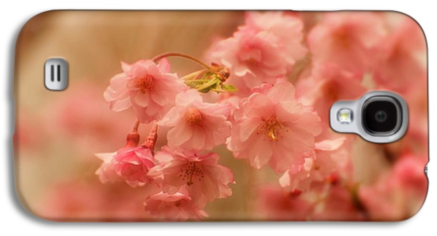 Cherry Blossom Tree Galaxy S4 Case featuring the photograph If Only For A Moment by Angie Tirado
