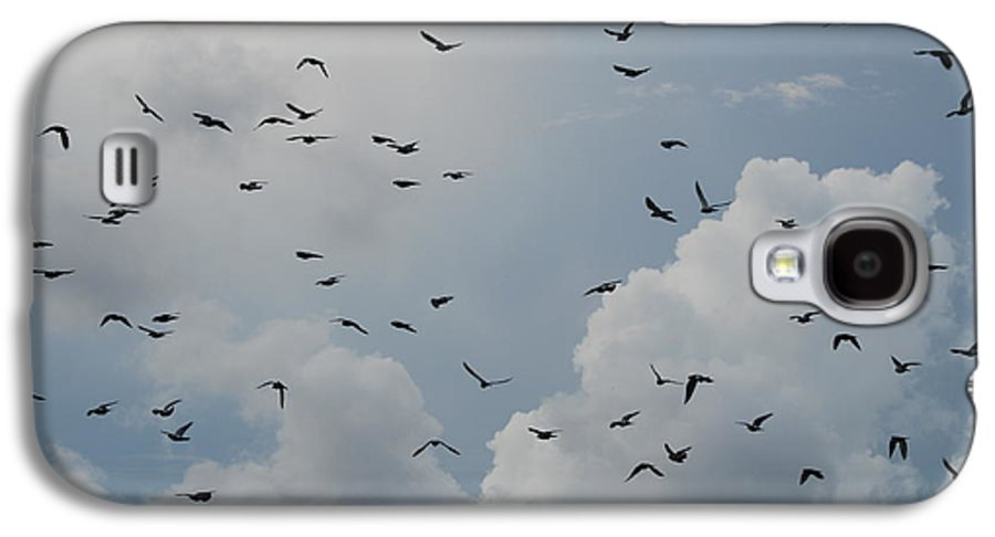 Birds Galaxy S4 Case featuring the photograph In Flight by Rob Hans