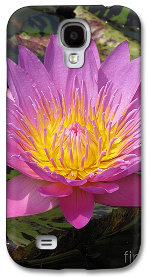 Lotus Galaxy S4 Case featuring the photograph In Position by Amanda Barcon