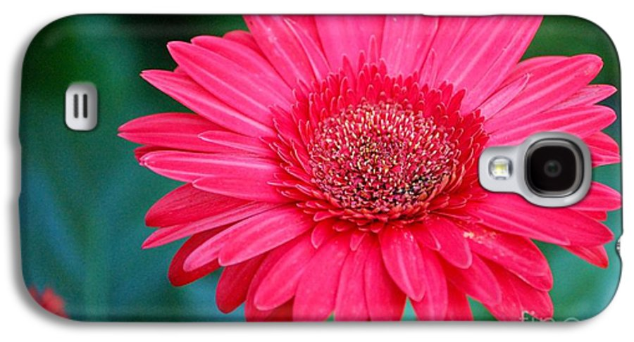 Gerber Daisy Galaxy S4 Case featuring the photograph In The Pink by Debbi Granruth