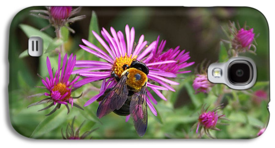 Bumble Bee Galaxy S4 Case featuring the photograph Just Beeing Debbie-may by Debbie May
