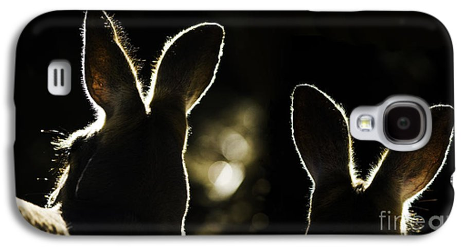 Kangaroo Galaxy S4 Case featuring the photograph Kangaroos Backlit by Sheila Smart Fine Art Photography