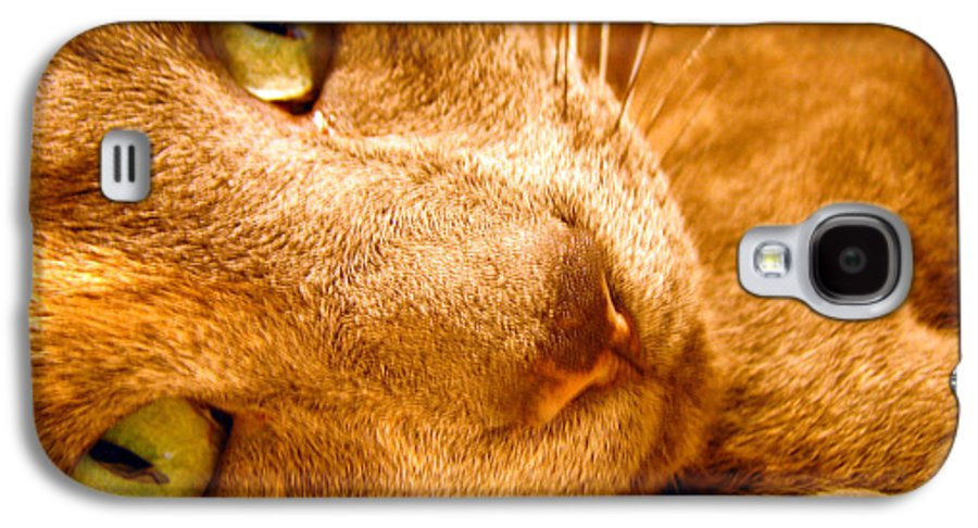 Cats Galaxy S4 Case featuring the photograph Kitty by Amanda Barcon