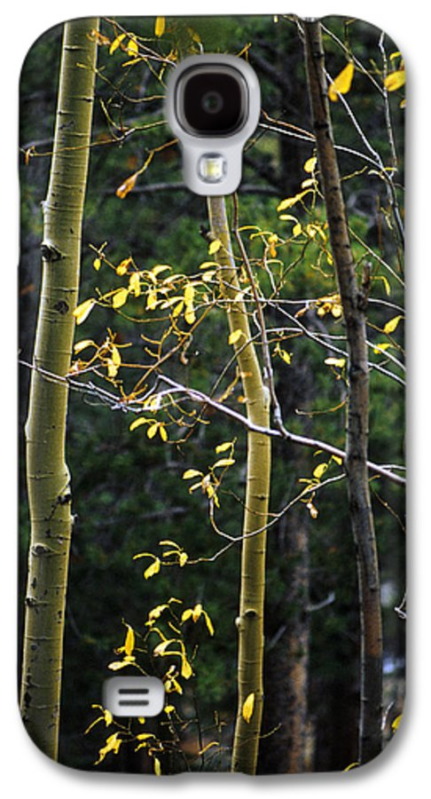 Aspen Galaxy S4 Case featuring the photograph Late Aspen by Jerry McElroy