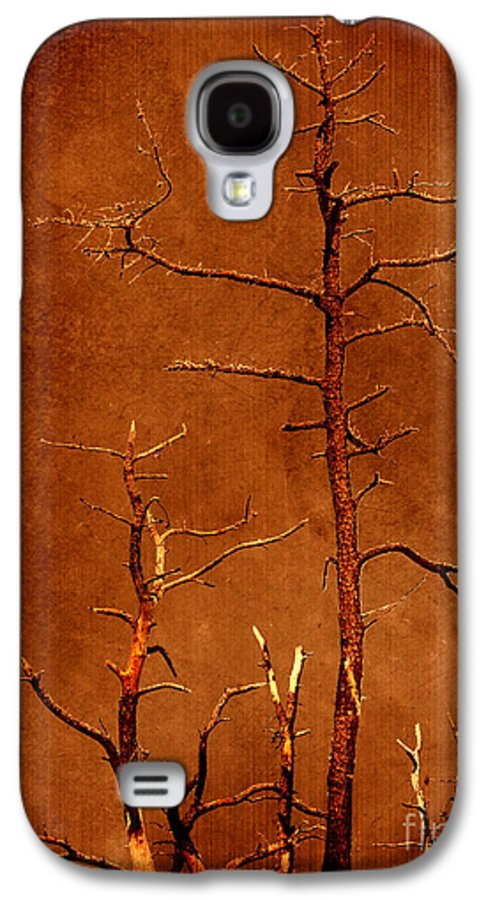 Dipasquale Galaxy S4 Case featuring the photograph Left Bare And Broken by Dana DiPasquale