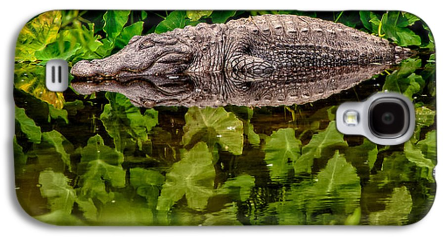 Alligator Galaxy S4 Case featuring the photograph Let Sleeping Gators Lie by Christopher Holmes