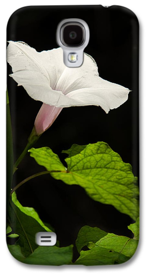 Flower Galaxy S4 Case featuring the photograph Light Out Of The Dark by Christopher Holmes