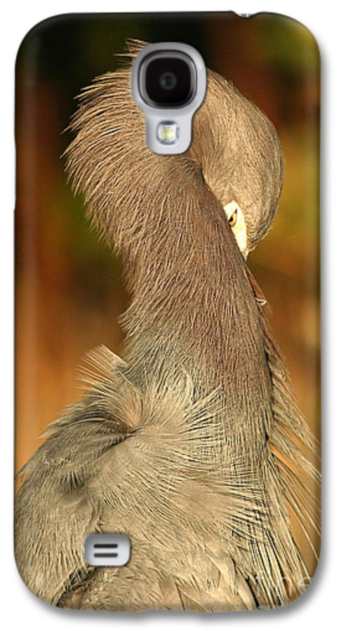 Heron Galaxy S4 Case featuring the photograph Little Blue Heron Feeling Bashful by Max Allen