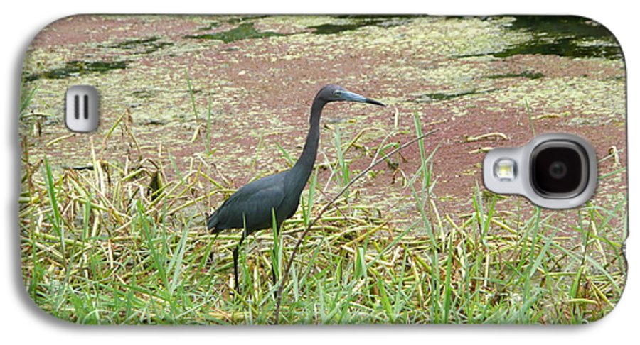 Nature Galaxy S4 Case featuring the photograph Little Blue Heron by Kathy Schumann