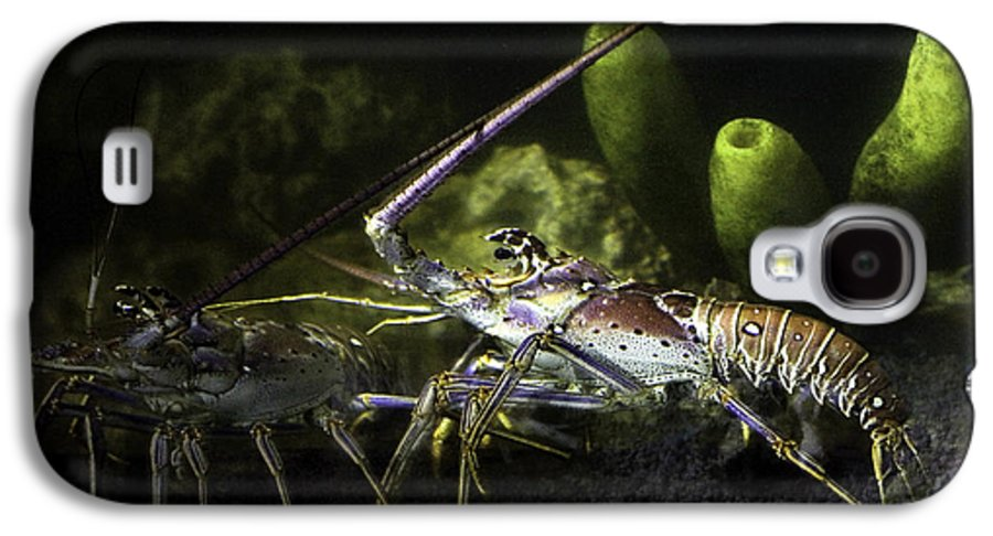 Lobster Galaxy S4 Case featuring the photograph Lobster In Love by Marilyn Hunt