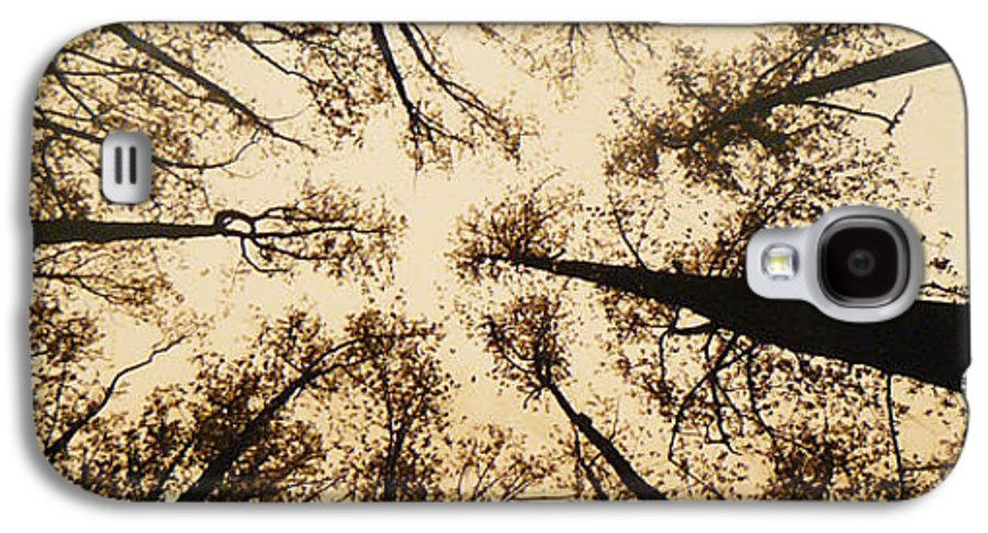Trees Galaxy S4 Case featuring the photograph Looking Up by Jack Paolini