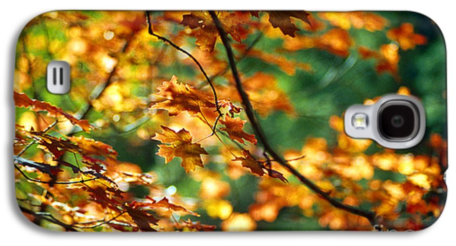 Fall Color Galaxy S4 Case featuring the photograph Lost In Leaves by Kathy McClure