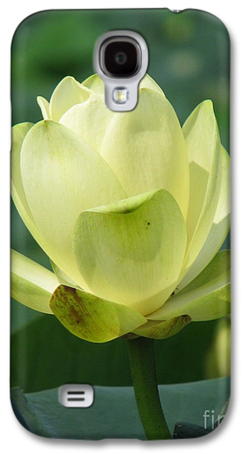 Lotus Galaxy S4 Case featuring the photograph Lotus by Amanda Barcon