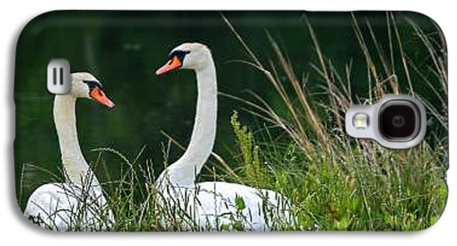 Clay Galaxy S4 Case featuring the photograph Loving Swans by Clayton Bruster