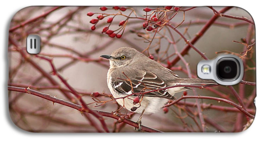 Mockingbird Galaxy S4 Case featuring the photograph Mockingbird In Winter Rose Bush by Max Allen