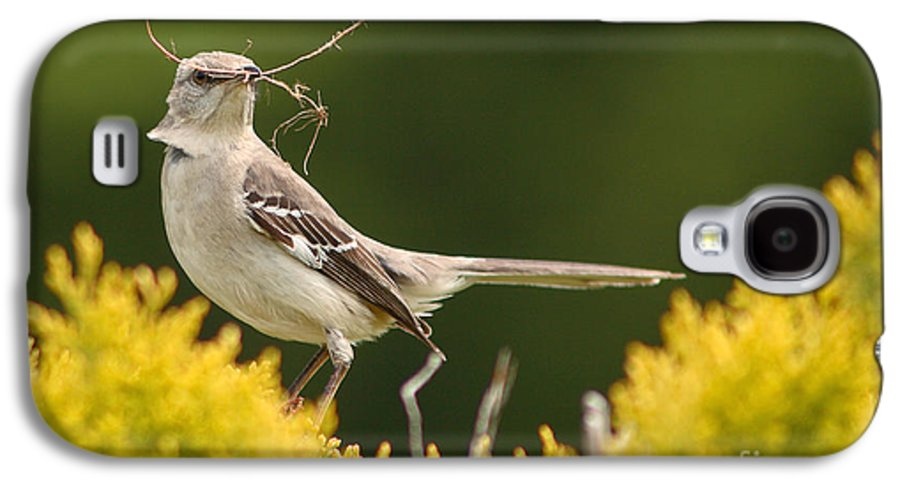 Mockingbird Galaxy S4 Case featuring the photograph Mockingbird Perched With Nesting Material by Max Allen
