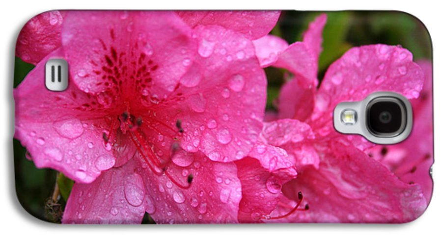 Azaleas Galaxy S4 Case featuring the photograph Morning Dew by Mary Gaines
