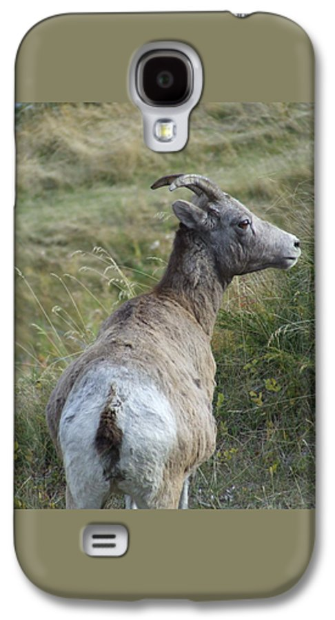 Bighorn Sheep Galaxy S4 Case featuring the photograph Mother Bighorn by Tiffany Vest