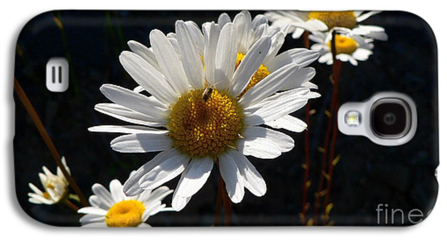Flowers Galaxy S4 Case featuring the photograph Mountain Daisy by Larry Keahey