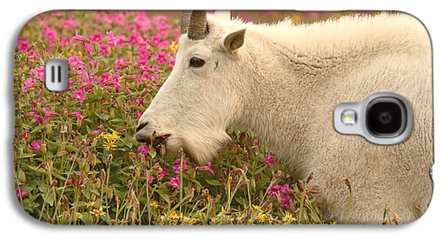 Mountain Goat Galaxy S4 Case featuring the photograph Mountain Goat In Colorful Field Of Flowers by Max Allen