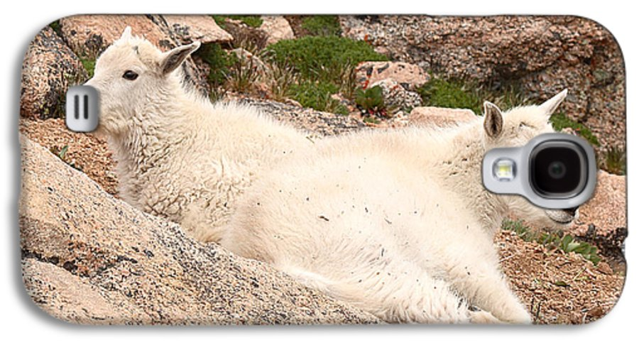 Mountain Goat Galaxy S4 Case featuring the photograph Mountain Goat Twins by Max Allen
