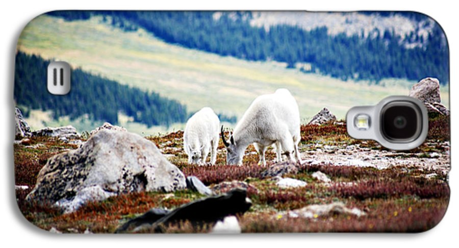 Animal Galaxy S4 Case featuring the photograph Mountain Goats 2 by Marilyn Hunt