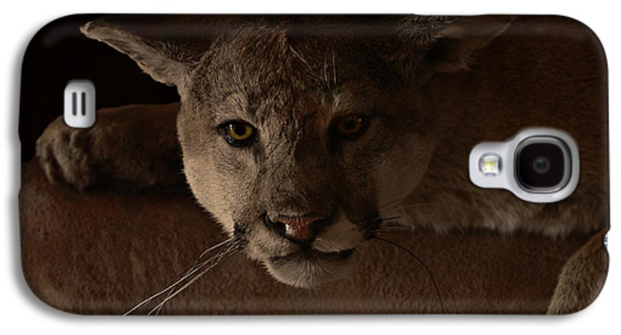 Cougar Galaxy S4 Case featuring the photograph Mountain Lion A Large Graceful Cat by Christine Till