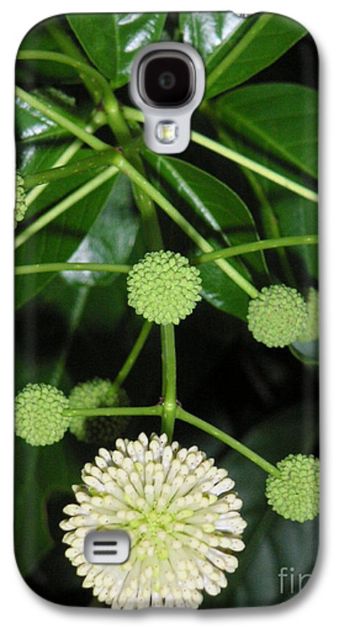 Nature Galaxy S4 Case featuring the photograph Nature In The Wild - Natural Pom Poms by Lucyna A M Green
