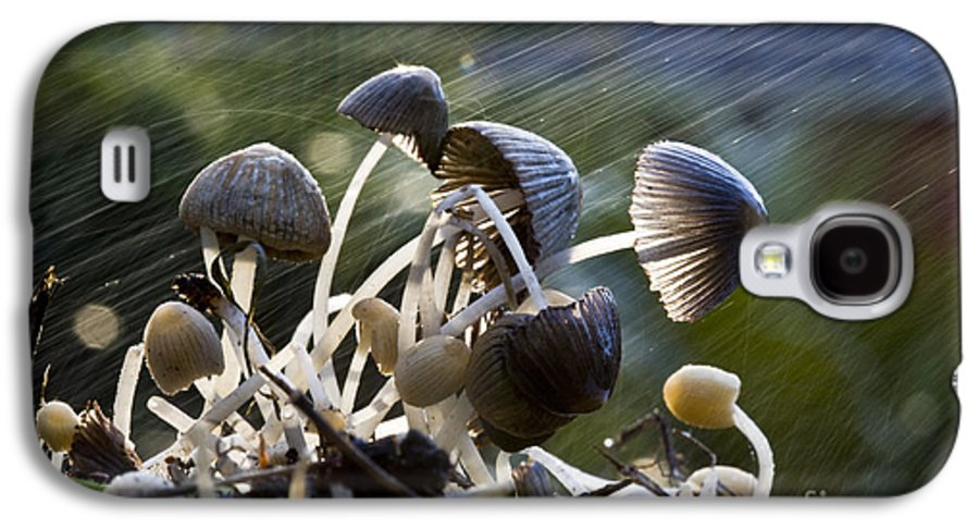 Mushrooms Rain Showers Umbrellas Nature Fungi Galaxy S4 Case featuring the photograph Nature by Avalon Fine Art Photography